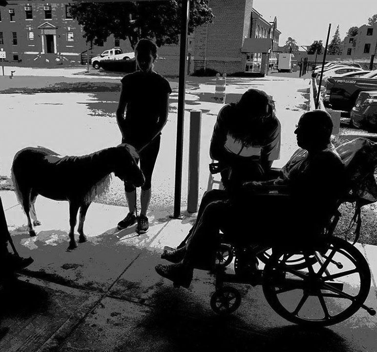 tiny horse and wheelchair