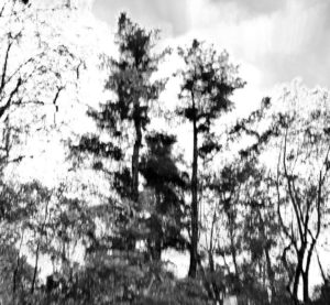 trees and skies