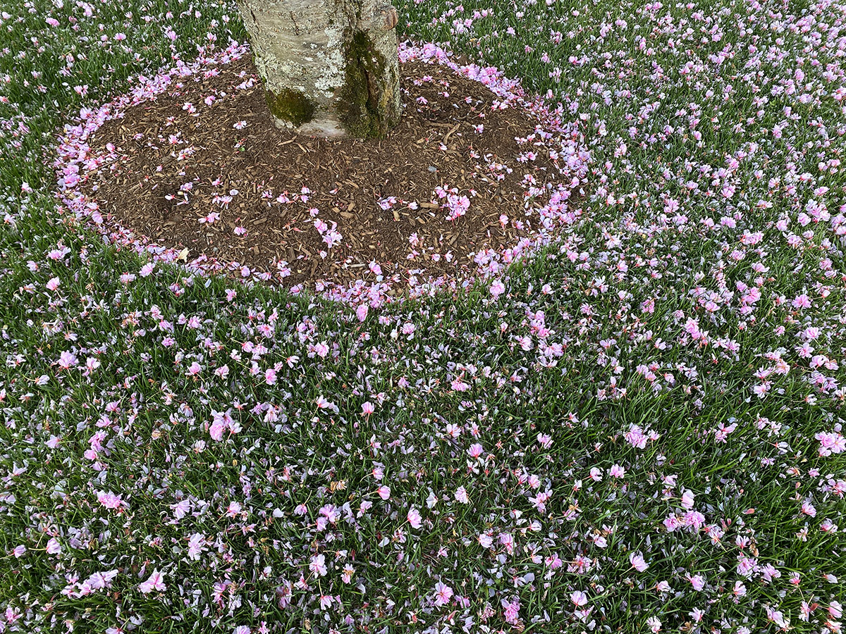 ring of flower petals