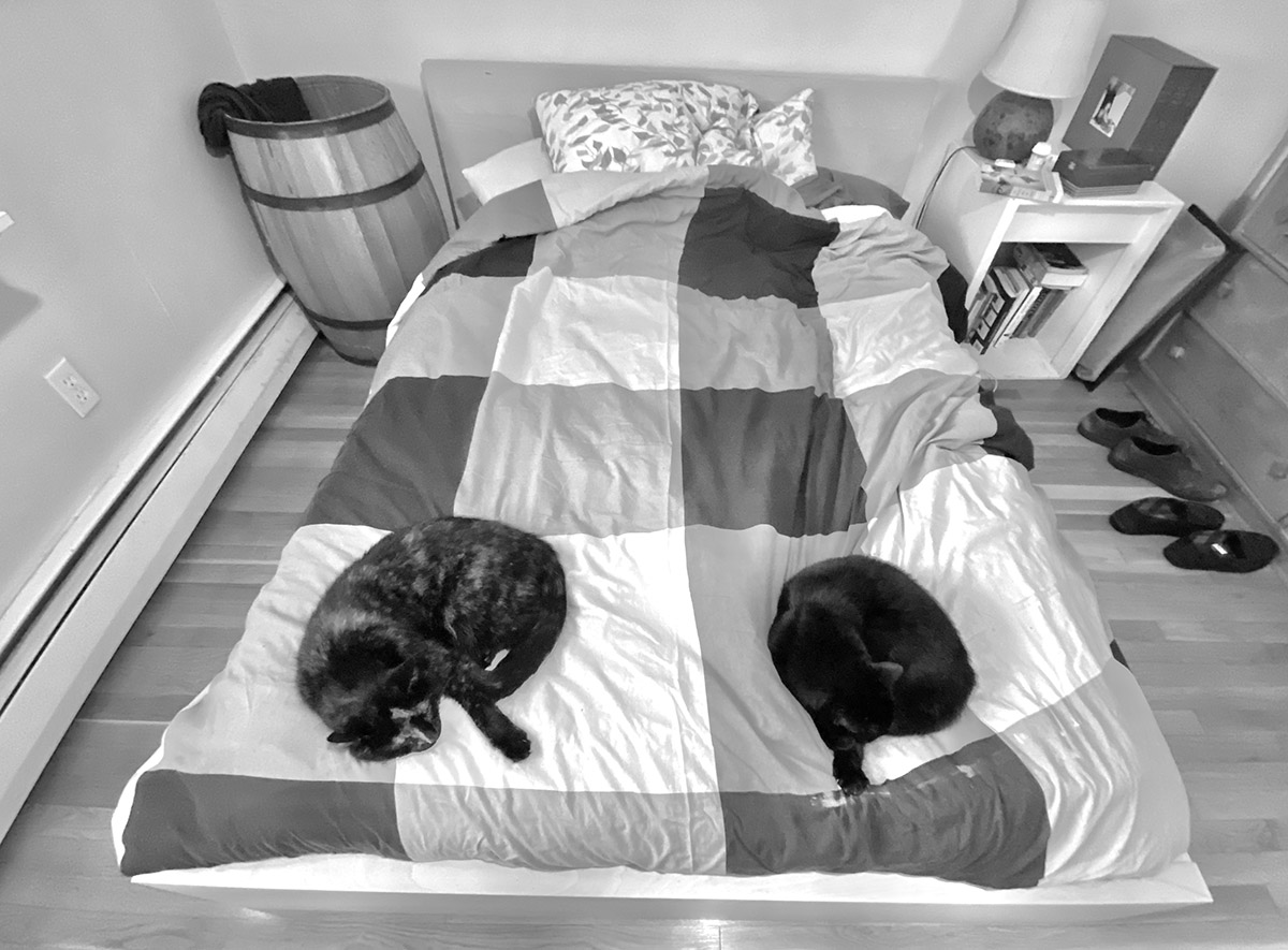 cats on bed in matched poses