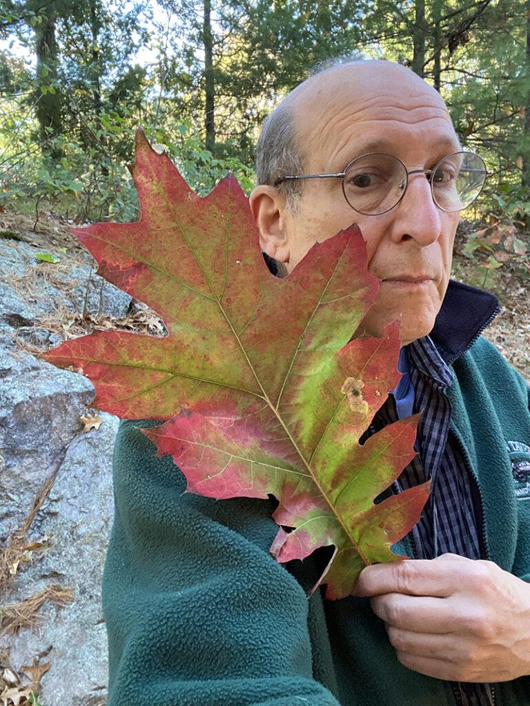big oak leaf