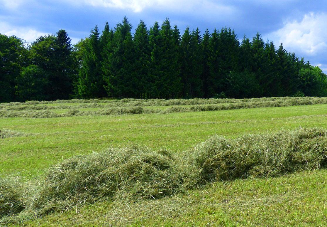 green hay